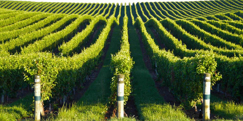 Viticulture Industry Is Serviced By Boyd Wilson Electrical Ltd In Marlborough NZ